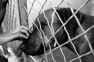 Pit bull label for shelter dogs may...