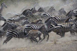 One third of mammals can't flee cli...
