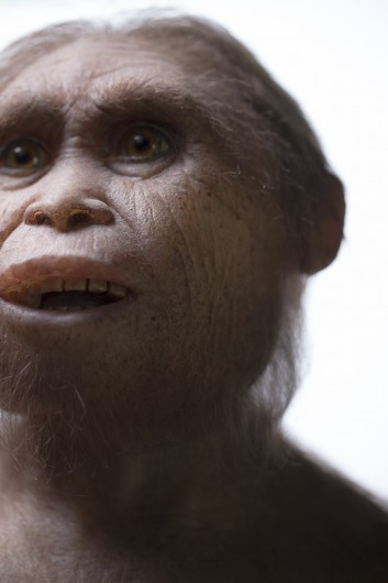 Reconstruction of Homo floresiensis by Atelier Elisabeth Daynes. Credit: Kinez Riza