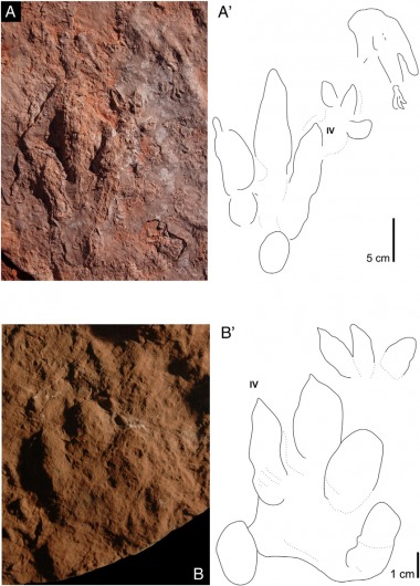 Fig-5-Archosaur-footprints-from-Irohalene-locality-CDUE-100-as-photographs-and - Copy