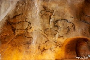Cave paintings match DNA analysis t...