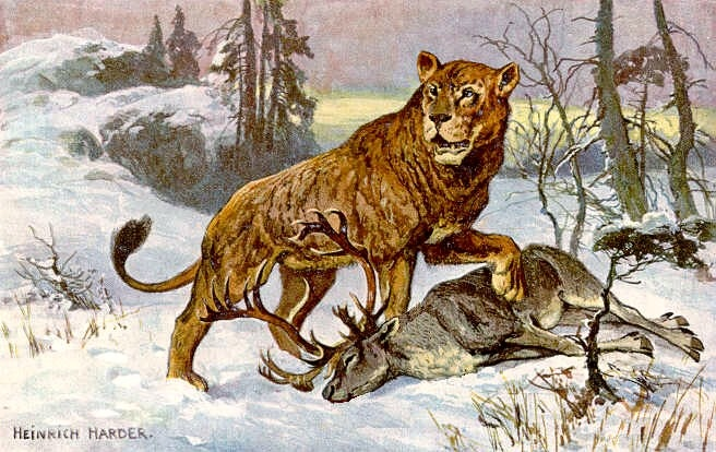 Early humans hunted Eurasian cave lions for their furs