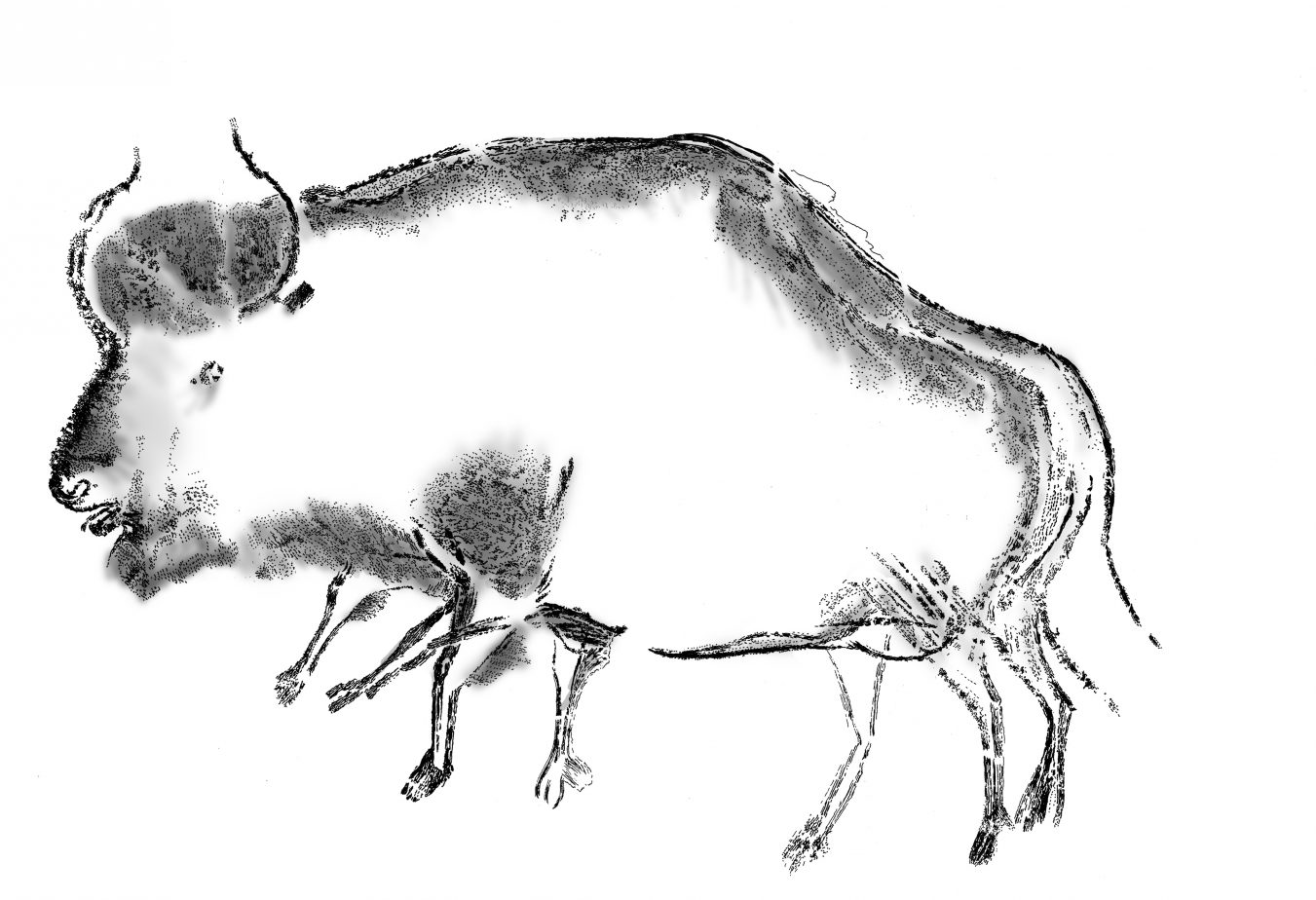 Reproduction of the blurred black charcoal drawing of a steppe bison (Bison priscus) from the Aurignacian period - Chauvet-Pont d'Arc cave (Ardèche, France). Credit: Carole Fritz and Gilles Tosello