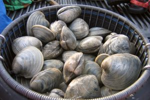 500-year-old clams recorded changes...