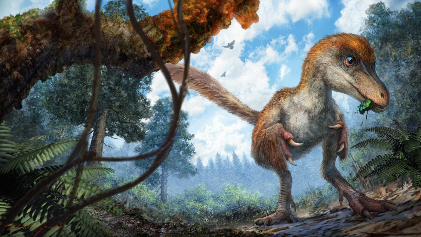 Artist rendition of the coelurosaur with its feathered tail. Credit: Chung-tat Cheung.