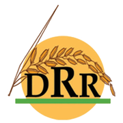 Directorate of Rice Research