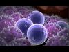 Immunotoxicology