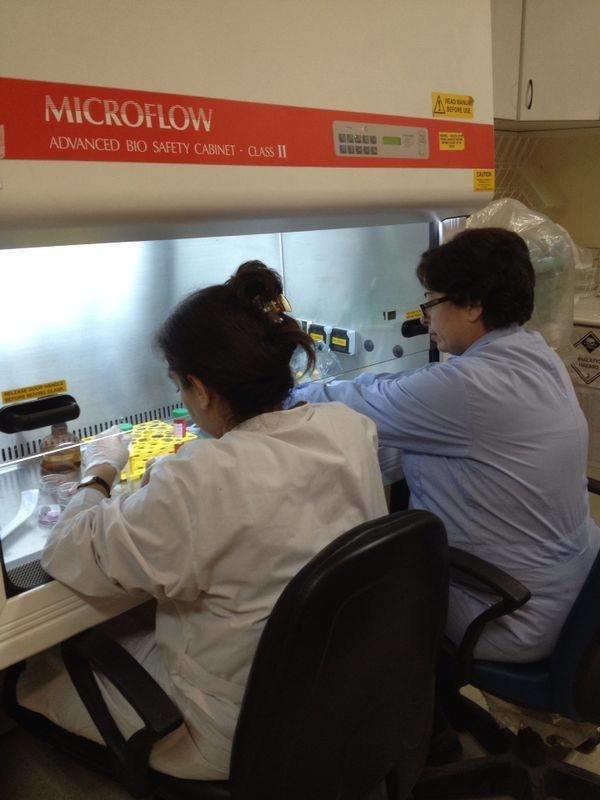 Aroub Almasri's lab | Independent Researcher