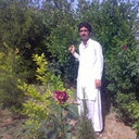 Shah Wazir